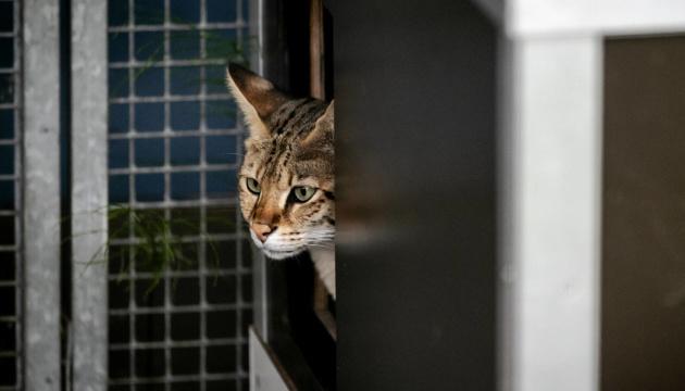 У Нідерландах коронавірусом заразилися коти та собака