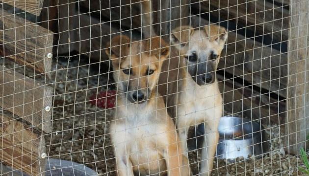 В Ужгороде выделили 1,5 миллиона на вольеры для животных в приюте