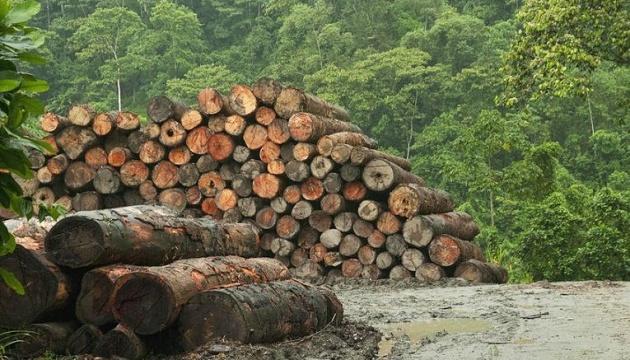 Під час пандемії темпи знищення тропічних лісів зросли більш ніж удвічі
