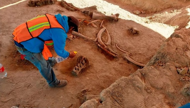 В Мексике нашли останки 60 мамонтов