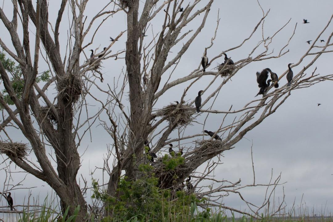 """Нацпарк на Одещині відправить туристів до """"Мертвого лісу"""""""