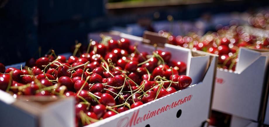Мелітопольська черешня - це бренд, але не цього року