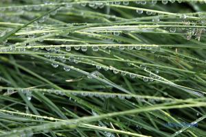 Дощі, грози та гради прогнозують лише на заході, місцями прогріє до +35°