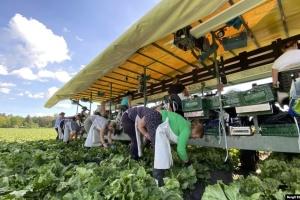 «Українці для нас незамінні»: Чехія може залишитися без врожаю через відсутність заробітчан