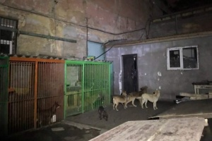 В Одесі горів притулок для бездомних тварин