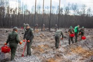 На Житомирщине восстановили более 100 гектаров поврежденного огнем леса