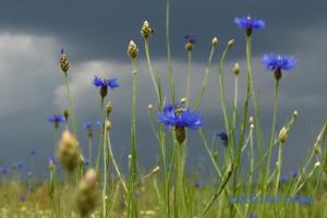 В Україні очікуються дощі з грозами і спека до +32°
