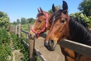 Продали квартиру й подалися до коней...