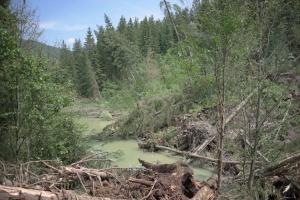 ДСНС: підтоплених населених пунктів після паводків на заході країни немає
