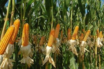 2020年ウクライナの穀物輸出先トップ10 1位は中国
