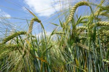 Die Ukraine erhöht Gerstenexport