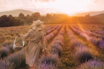 Des champs de lavandes sont à découvrir en Transcarpathie