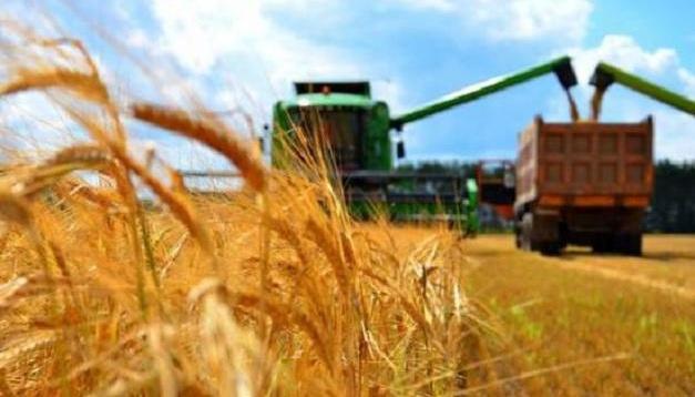 Economía: Agricultores cosechan 36 millones de t de cereales y legumbres
