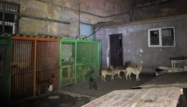 В Одессе горел приют для бездомных животных