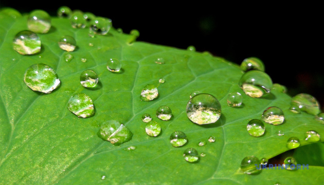 В Украину идут дожди, но жара не отступает