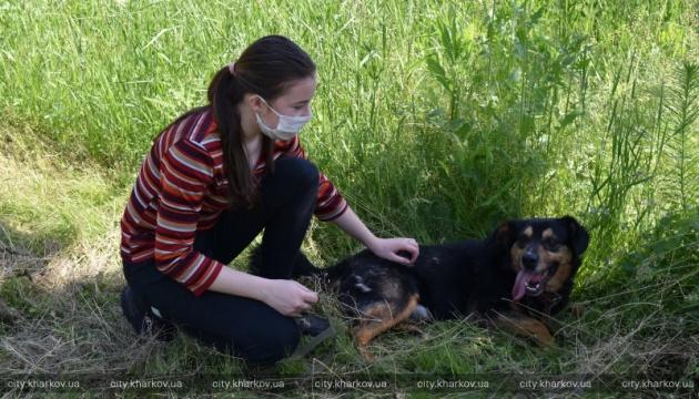 В Харькове приют для животных открыл двери для посетителей