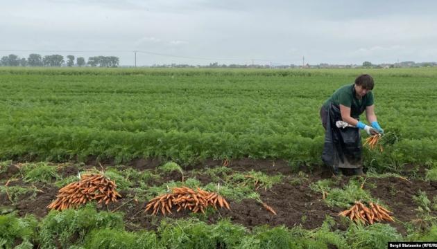 Чеські фермери: «Ми раді, що українці повертаються, і готові оплачувати їм тести на COVID-19»