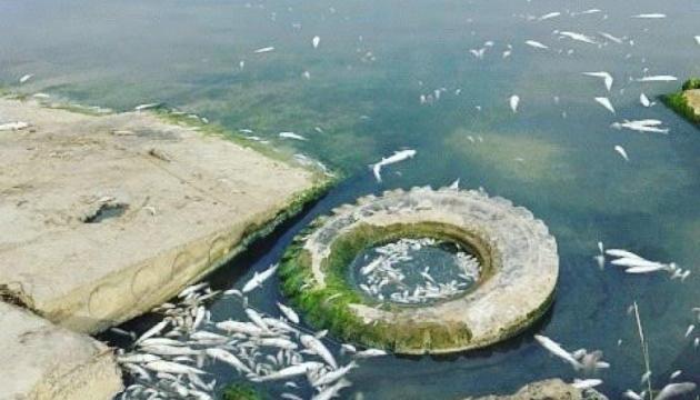 У Хаджибейському лимані зафіксували замор риби