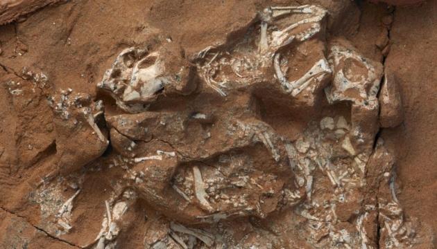 Скам'янілість під назвою