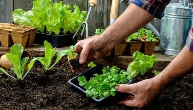 Салат и шпинат: полезные свойства. Инфографика