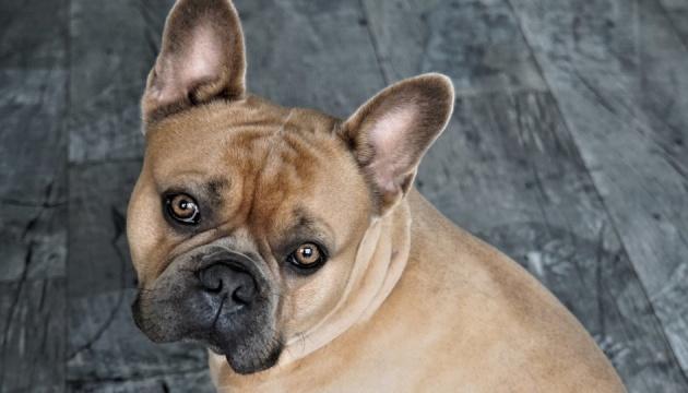 Canada : Des dizaines de chiens en provenance d'Ukraine morts à l'aéroport
