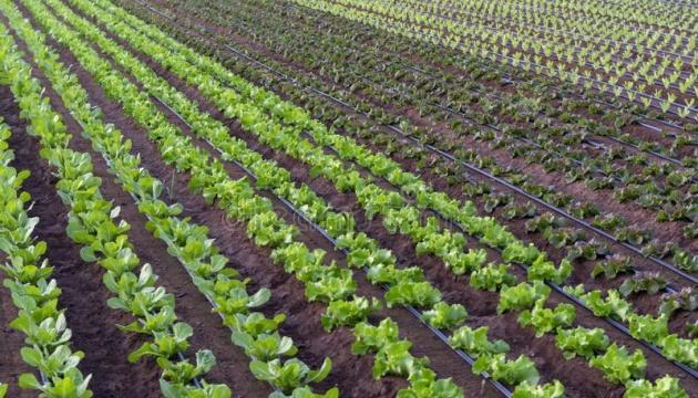 Агрохолдинг МХП презентував програму для фермерів «Органічний гектар»