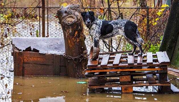 L'ouest de l'Ukraine touché par les pires inondations depuis 2008