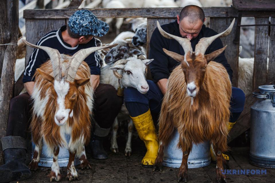 Производство сыра пастухами Закарпатья / Фото: Сергей Гудак, Укринформ