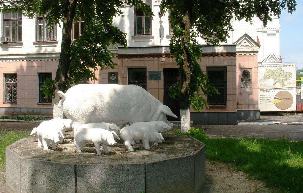 Институт свиноводства им.А.В.Квасницкого в Полтаве