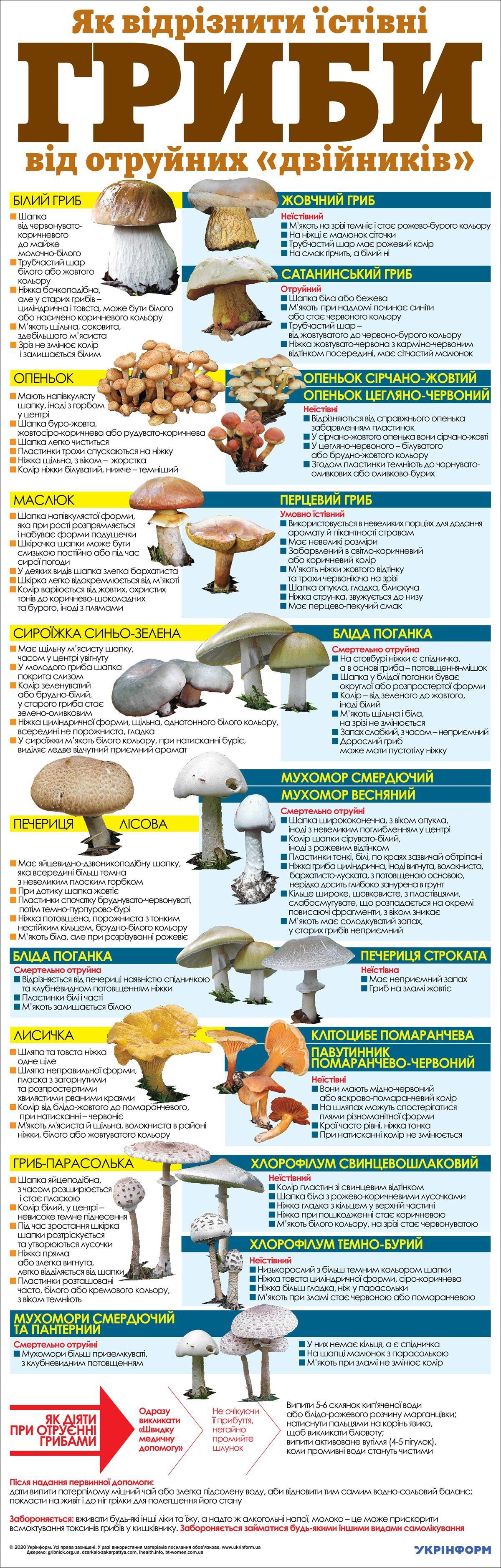 Як відрізнити їстівні гриби від отруйних - інфографіка