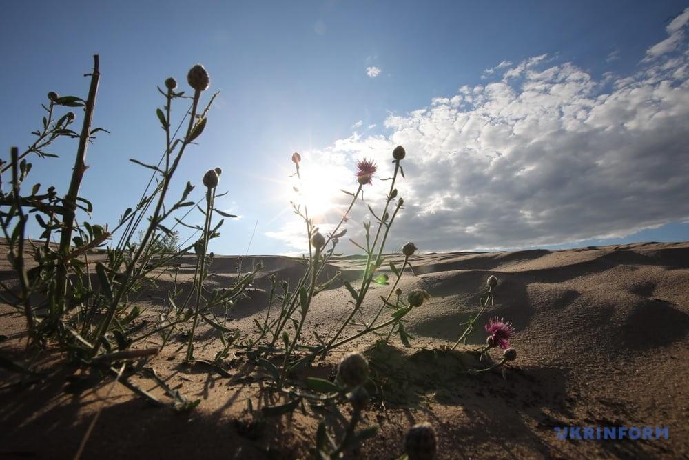 Фотоподорож: Кицівська пустеля на Харківщині