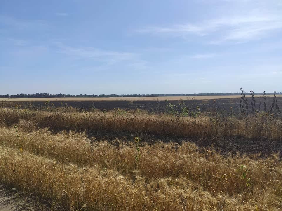 На Чернігівщині згоріли шість гектарів пшениці, підозрюють підпал