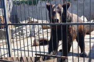 Конфіскованим левам і ведмедям шукають новий дім через СЕТАМ