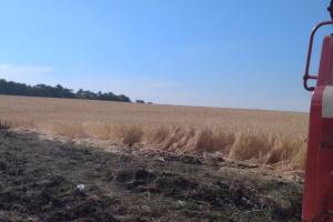 На Харьковщине от огня спасли ячменное поле и хвойный лес