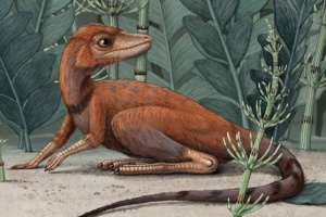 На Мадагаскаре нашли останки крошечного предка динозавров