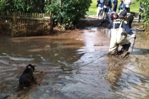 Ливни и шквалы накрыли Одесскую область: повалены более 100 деревьев, пострадали люди