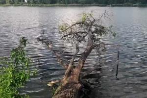 В озеро на Оболони сливали отработанные масла