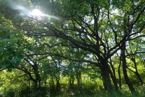 На Донеччині оголошено чотири нові ландшафтні заказники