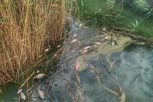 В Одесской области обнаружили массовую гибель рыбы в Кучурганском водохранилище