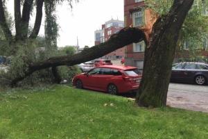Буревій в Естонії залишив без світла 34 тисячі будинків