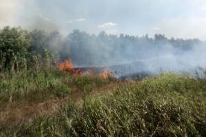 Суха трава, сміття, чагарники: на Миколаївщині за добу загасили 15 пожеж