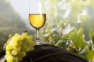 Украинские виноделы и кондитеры представили свою продукцию китайским импортерам