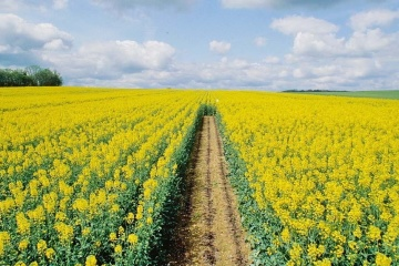 Ukraine's rapeseed exports hit new record