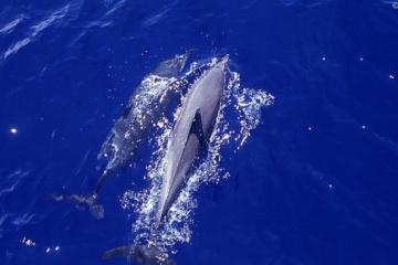 Aujourd'hui marque la Journée des dauphins : ces mammifères sont en danger