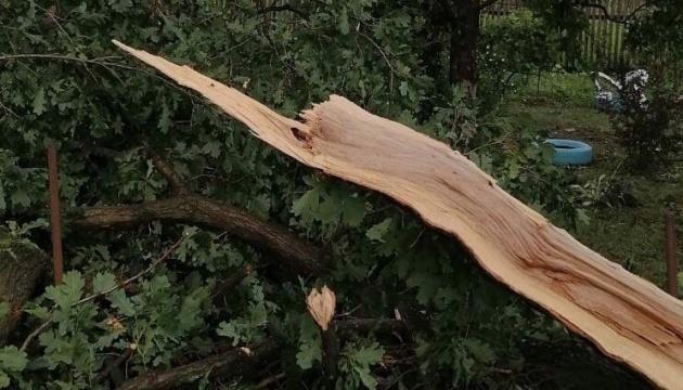 На Львівщині сильний вітер валив дерева - постраждала жінка