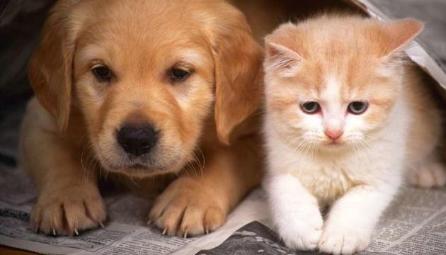 Два українські бренди WAUDOG та Animal ID запустили кампанію для підтримання вирішення проблеми безхатніх тварин в Україні