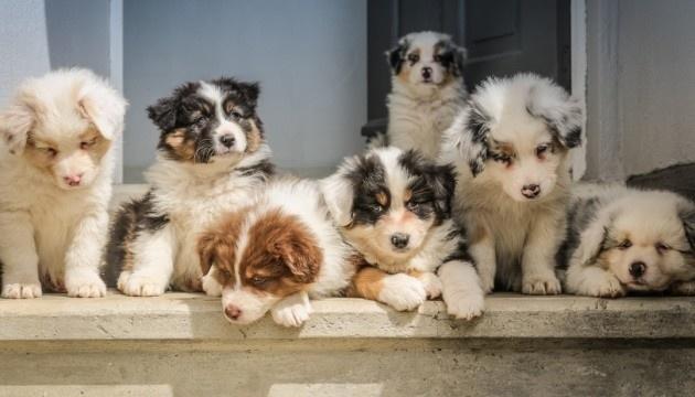 Canadá prohíbe la importación de cachorros comerciales desde Ucrania