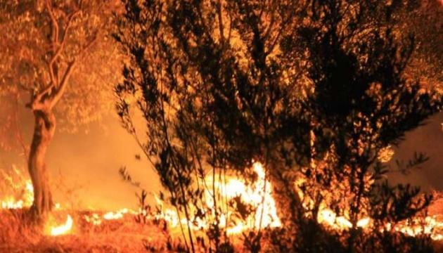 В Туреччині горить ліс: на гасінні задіяні вертольоти і 20 пожежних команд