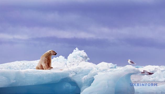 Белые медведи могут исчезнуть к концу столетия - ученые