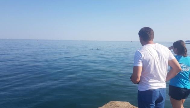 На одесском пляже застряли шесть дельфинов